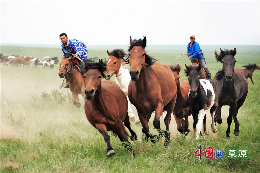 【原創組圖】草原的馬及李賀《馬詩》二十三首