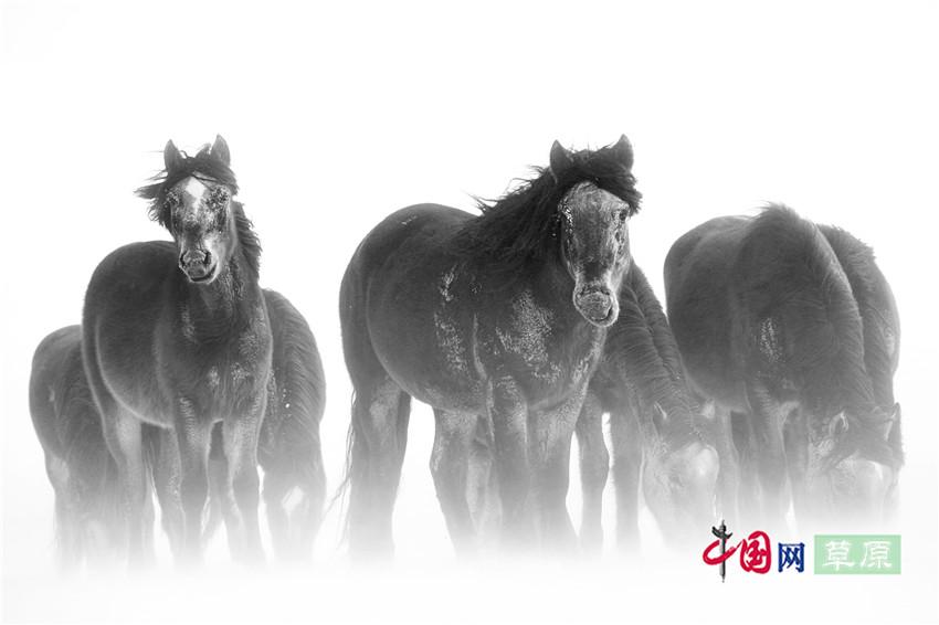 【原创组图】草原的马及李贺《马诗》二十三首