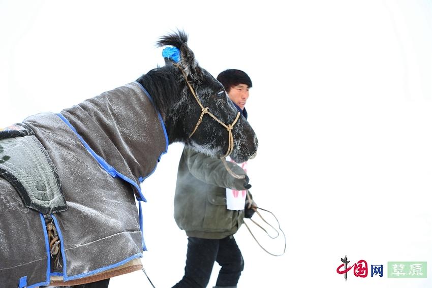 沸腾的雪原:极寒天气下激情无限的赛马大赛