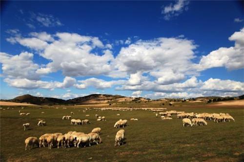 內蒙古蜜月之行 感受大草原的自然風情