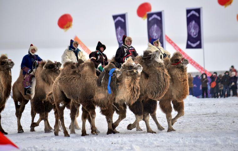 駱駝隊入場。