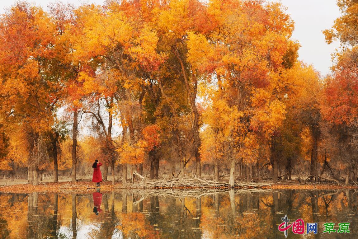 当然,在奇美多彩的草湖,在姿情万千的轮台,在金辉生香的胡杨树下等着