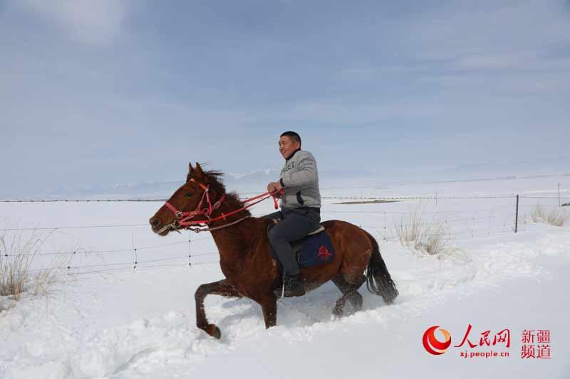 新疆昭苏 雪地万马奔腾 组图图片