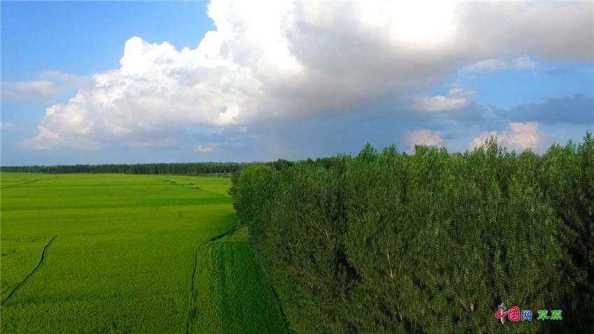 内蒙古奈曼旗:茫茫沙海披绿生金  为建设大美山