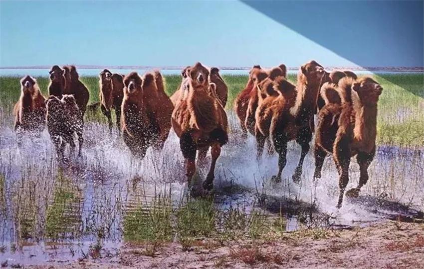 阿拉善:五彩斑斓的大美热土