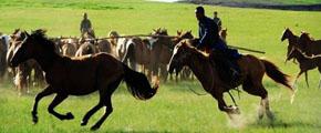 套馬比賽,草原牧民,套馬桿,繩索套馬