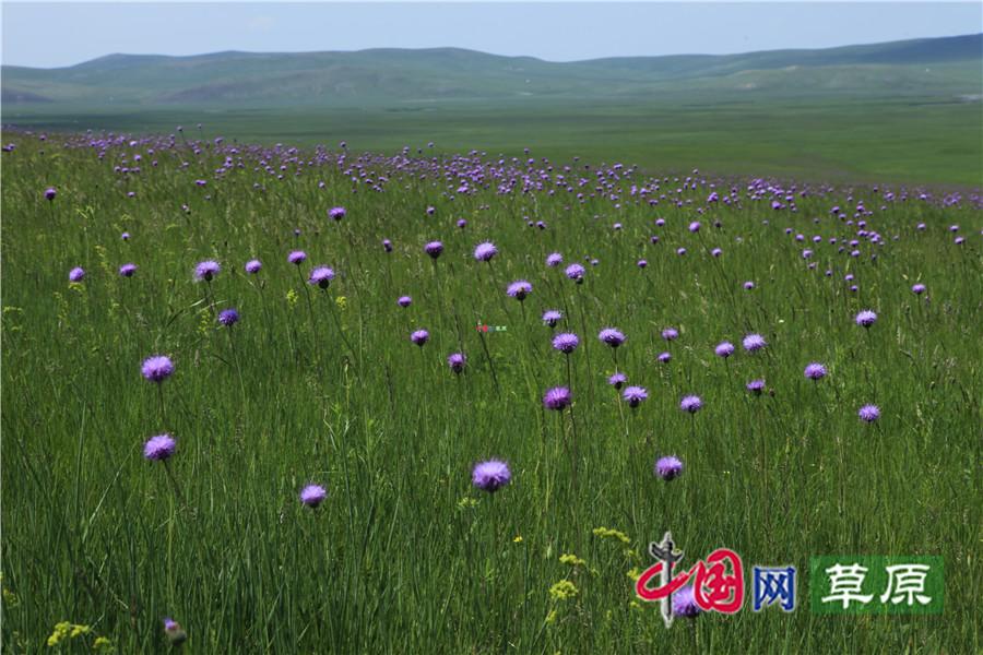 【原创】中国最美的夏天:呼伦贝尔草原视频公国家门套压图片