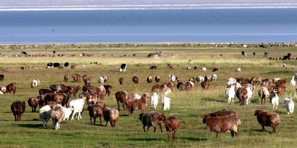 巴裏坤草原生態美