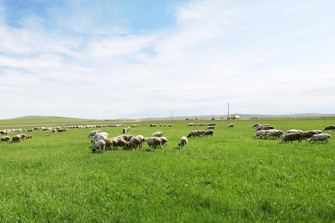 乌拉盖草原管理区提升科技含量发展草业