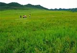 你從未見過的內蒙古通遼山地草原