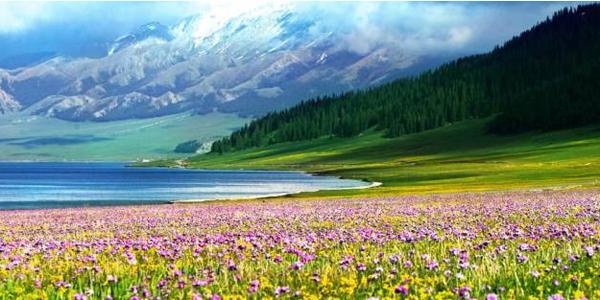 新疆各大草原的亮麗風景