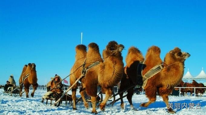 中国冰雪那达慕 让你感受不一样的内蒙古